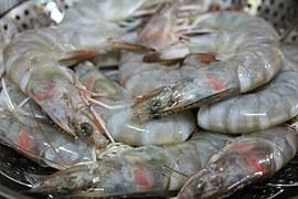 shrimp-489641__180