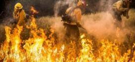 數十起野火在舊金山北部地區肆虐