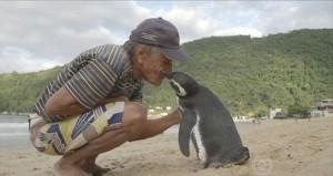 企鵝KISS恩人