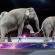 玲玲馬戲團最後一場大象表演