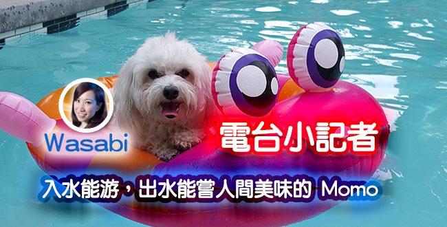 【電台小記者】入水能游,出水能嘗人間美味的 Momo