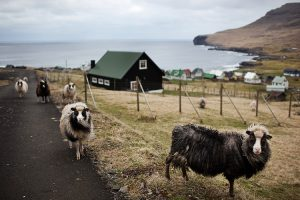 Faroe Island5