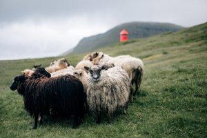 Faroe Island6