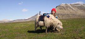 【夏日旅神】羊咩咩帶您遊法羅群島