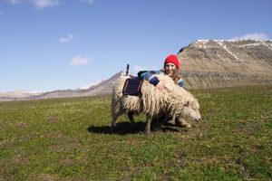 sheepmap1