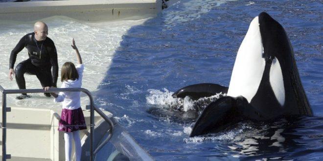聖地牙哥海洋世界  殺人鯨昨天做最後演出