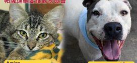 帕薩迪納愛護動物協會 – 本週寵物明星